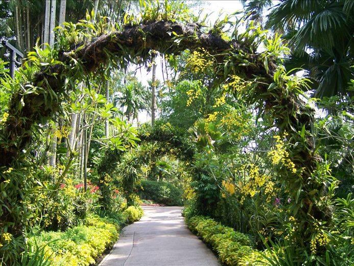 新加坡植物園3
