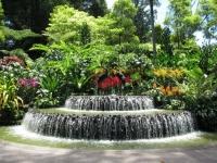 新加坡植物園2