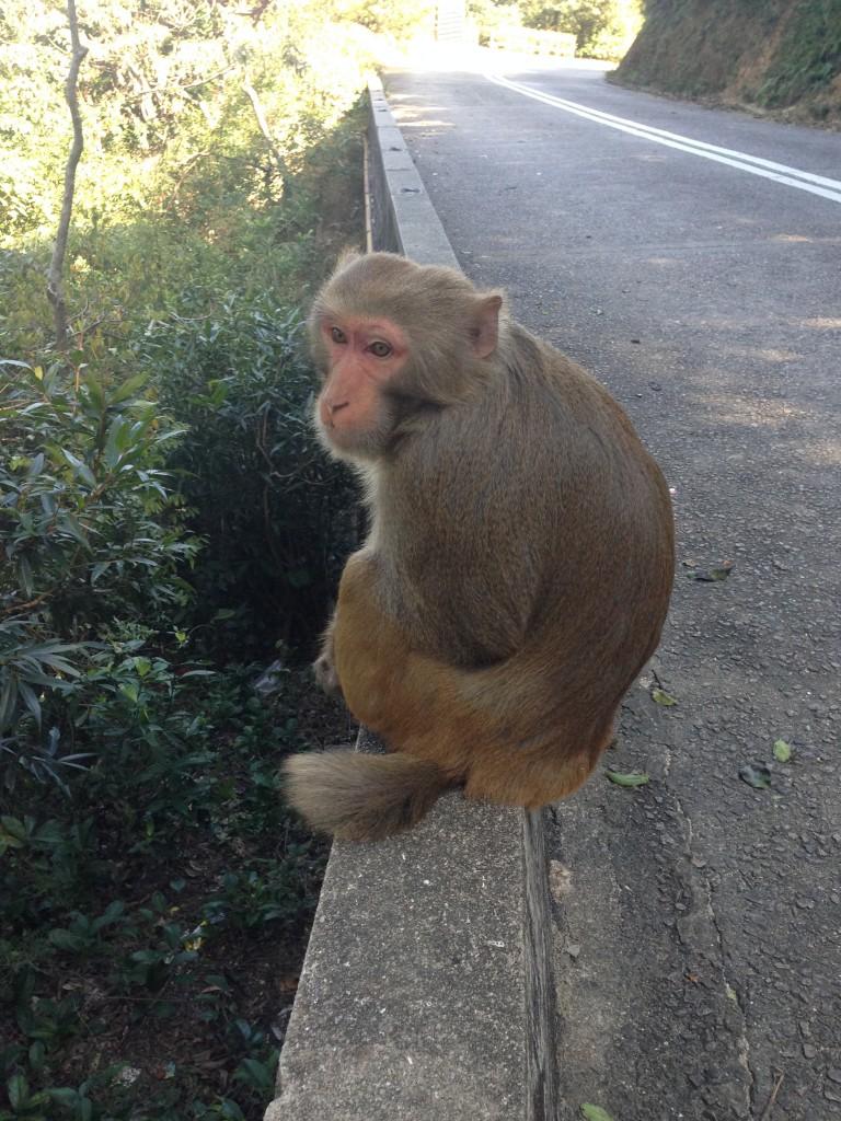 猴子回眸一看