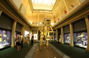 澳洲夏令營課程景點3_澳大利亞博物館