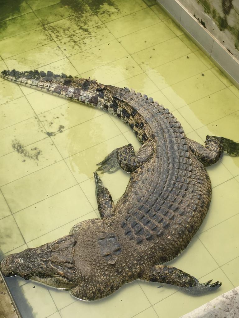 遊學馬來西亞:南亞港鱷魚園
